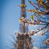 Paris pictures – Eiffel Tower in spring