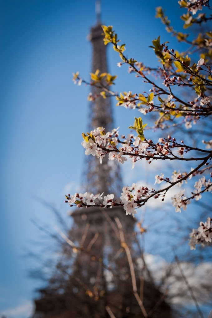 Paris Pictures Eiffel Tower in the Spring